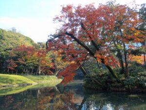 小石川後楽園 紅葉 見ごろ