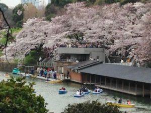 千鳥ヶ淵 お花見 ボート