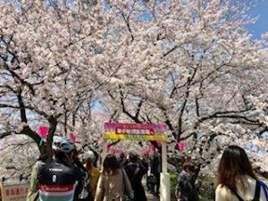 幸手 桜 渋滞