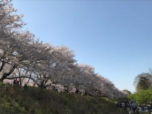 幸手 桜 混雑